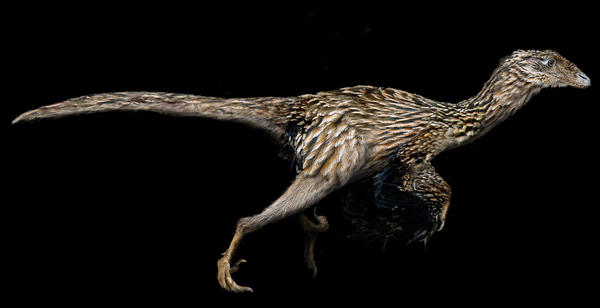 Undescribed Coelurosaur by keesey
