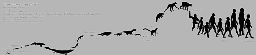 human evolution future theories