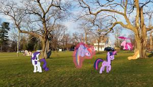 Ponies on Campus