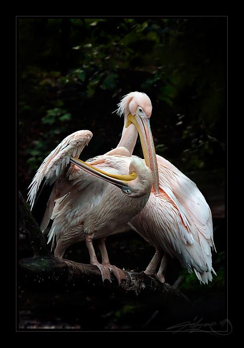 Pelican Hygene by tisbone