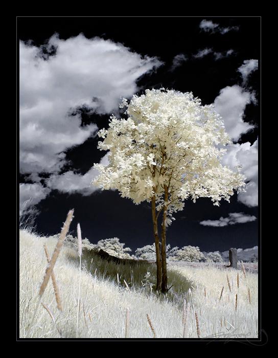 a free tree III by tisbone