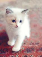 Soft Kitty by dozzyExplorer