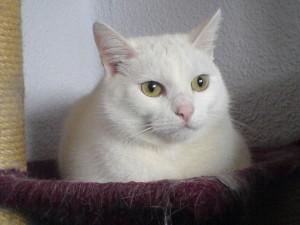 SRKAddict's Profile Picture