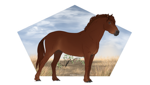 Pafortis Pony   #P105