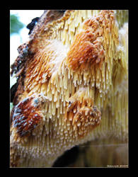Deadly Fungus