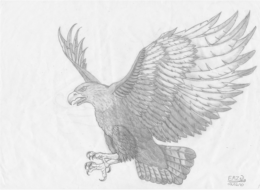 how to draw a hawk flying photo2