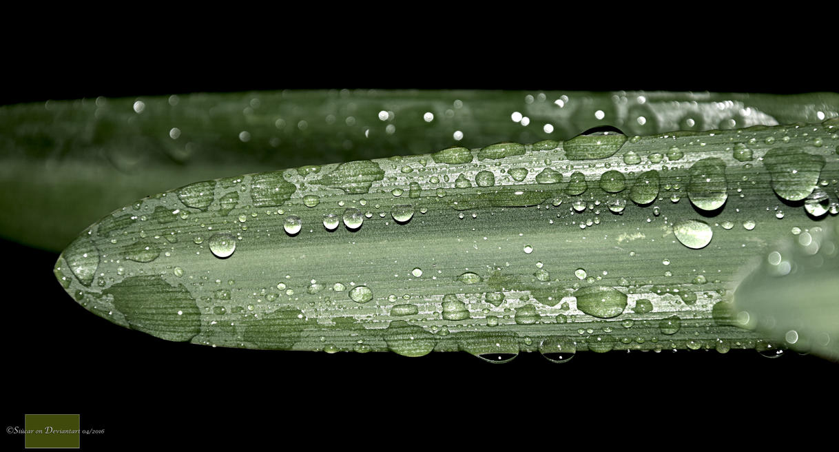 Droplets by SIUCAR