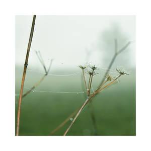Dewdrops - Pt II