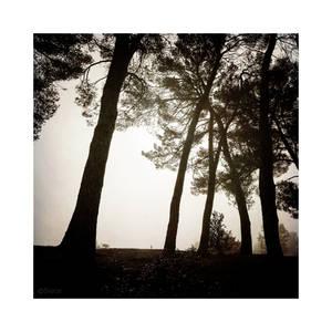 Pine Trees Shades - Pt I