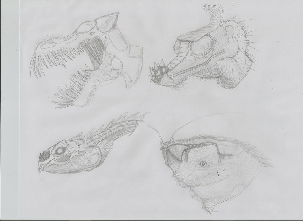 Quick draw - concept heads by SparrowWrightheart