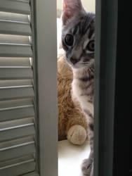 Kitten looking out the window