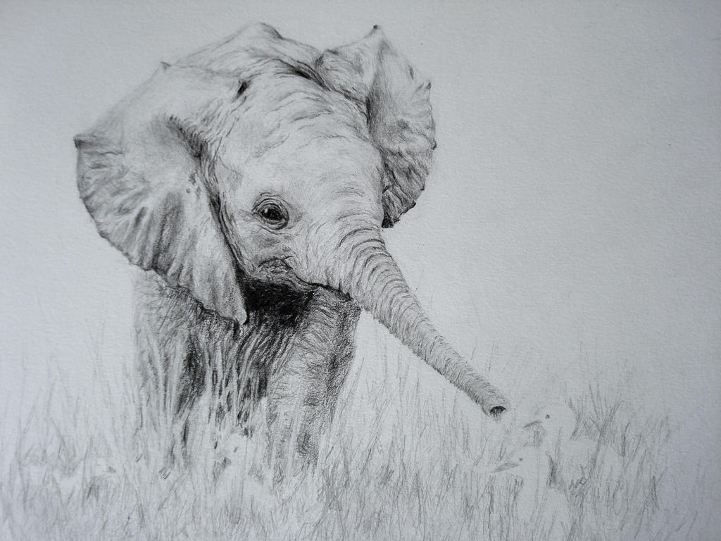 Pencil Drawings Of Elephants Tumblr The Baby-Elephant by I...