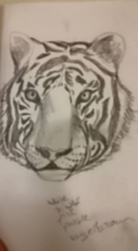Tiger Sketch by anonymous97