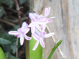 Backyard Flower by Sir-Real