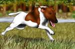 Smooth Fox Terrier on the Run