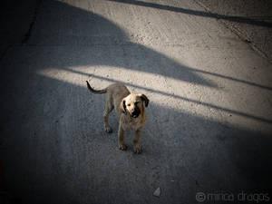 Tramp dog puppy