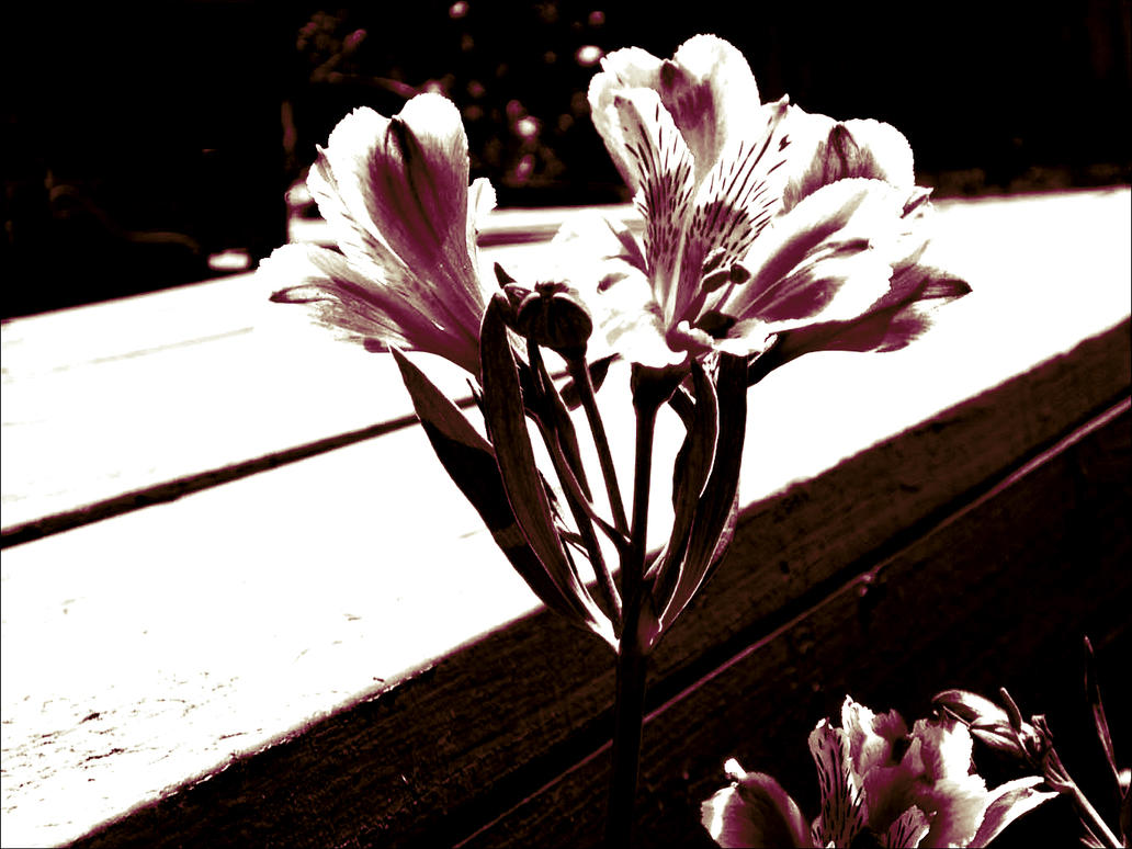 Tylers Flower by crazeypotter on DeviantArt