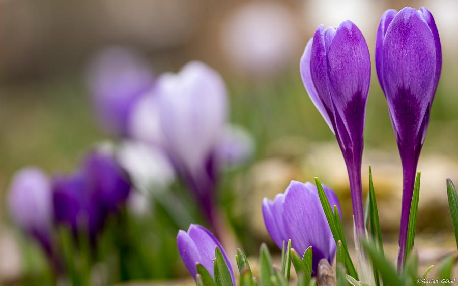 Spring by AdrianGoebel