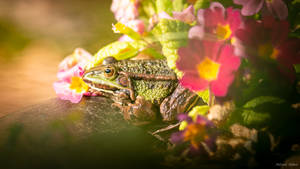 Flower Lover by AdrianGoebel