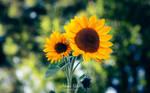 Summer Vibes by AdrianGoebel