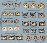 Owl style pratcice