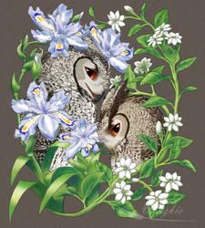 Blooms by Vanzkie