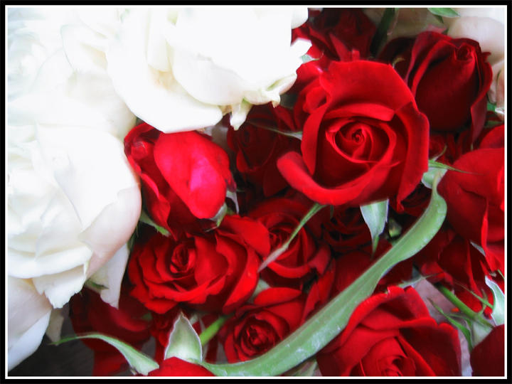 Roses By Notyourbabydoll On Deviantart