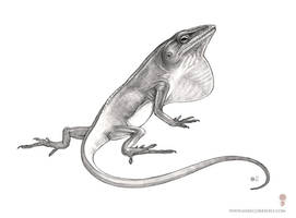 Anole Study by MIKECORRIERO