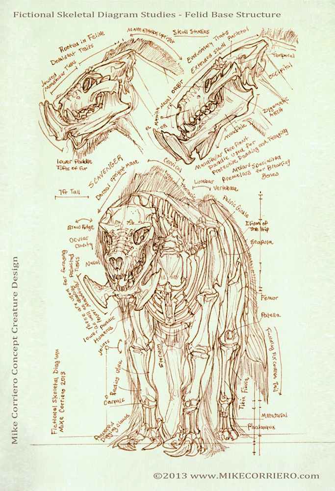 Feline Scavenger Skeletal Diagram by MIKECORRIERO