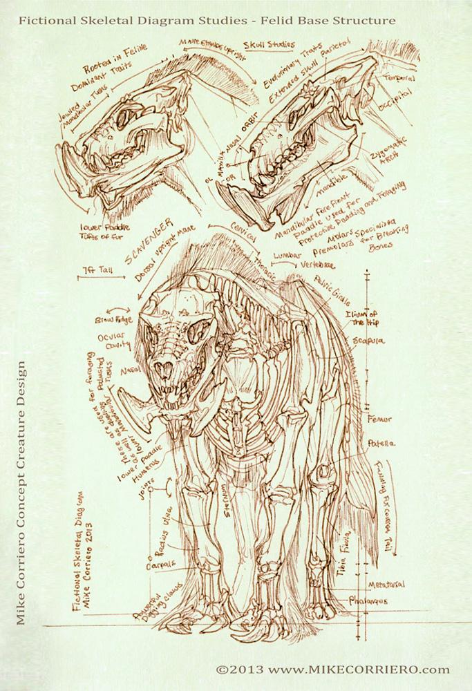 Feline Scavenger Skeletal Diagram by MIKECORRIERO