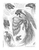 Creature Sketch Page Phoenix by MIKECORRIERO