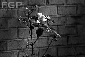 Flower by OraclePhoenix