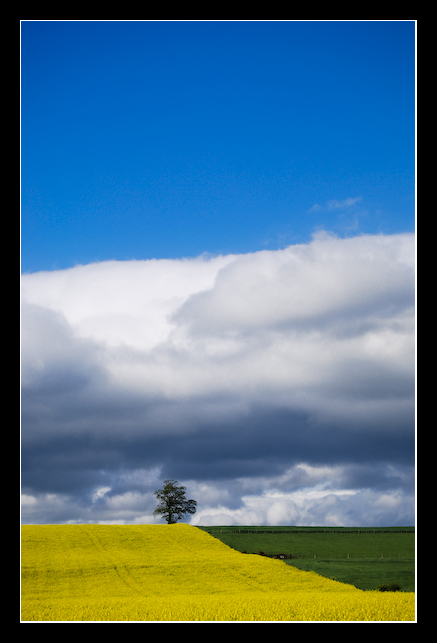 Field of Clouds 2 by MessiahKhan