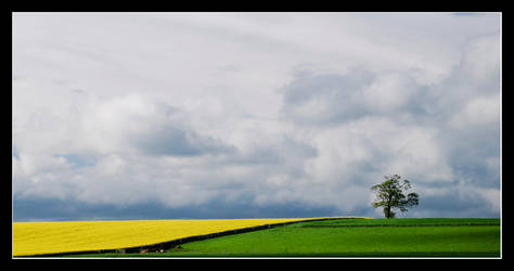 Field of Clouds 3 by MessiahKhan