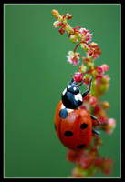 Jack the ladybird by MessiahKhan