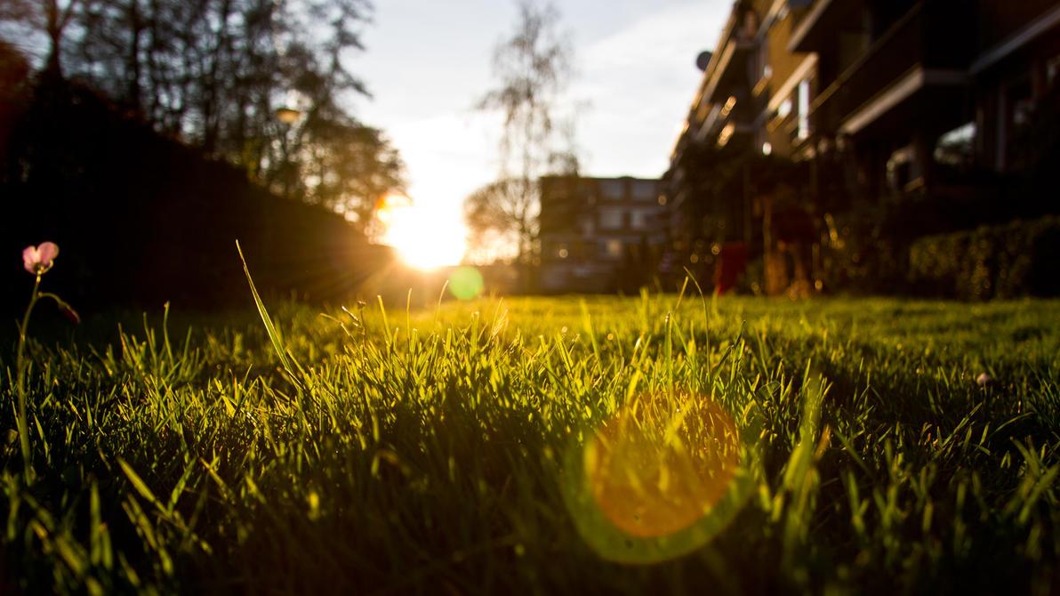 Backyard by Kristalsuiker