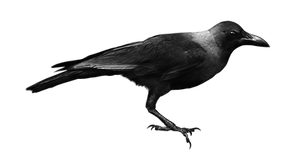 Bird by ViolettaLeStrange
