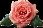 flower STOCK