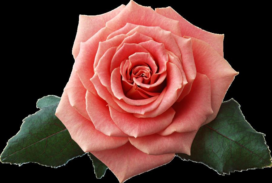 flower STOCK by ViolettaLeStrange