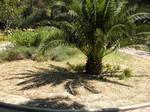 Palm tree by jeannemoon