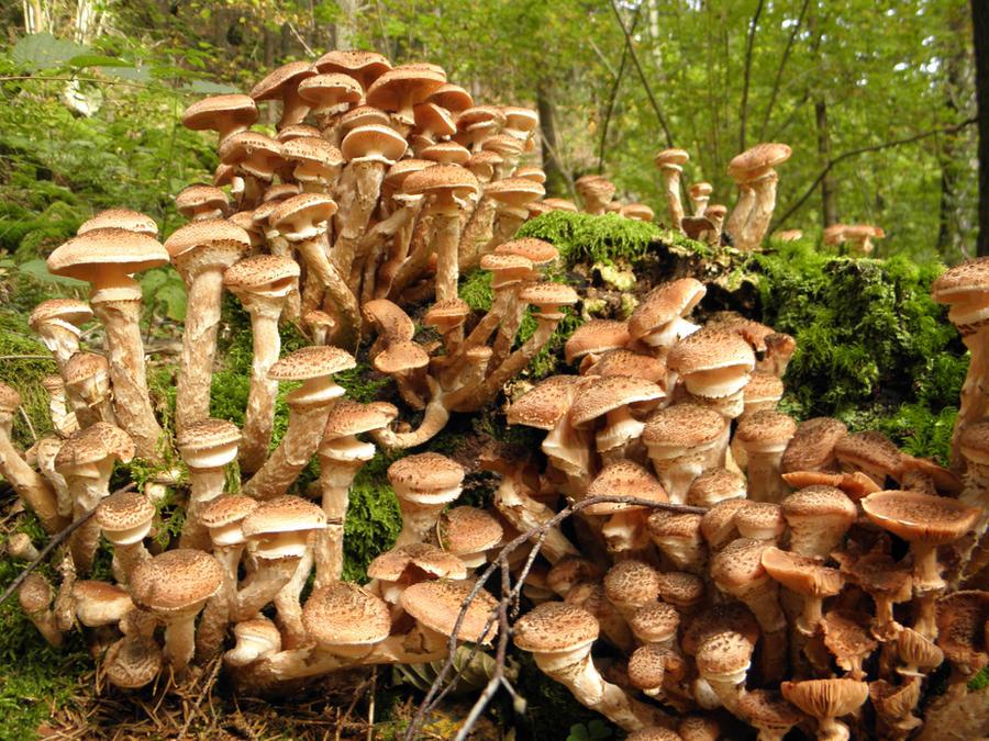 Mushroom city by jeannemoon
