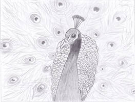 Peacock by jeannemoon