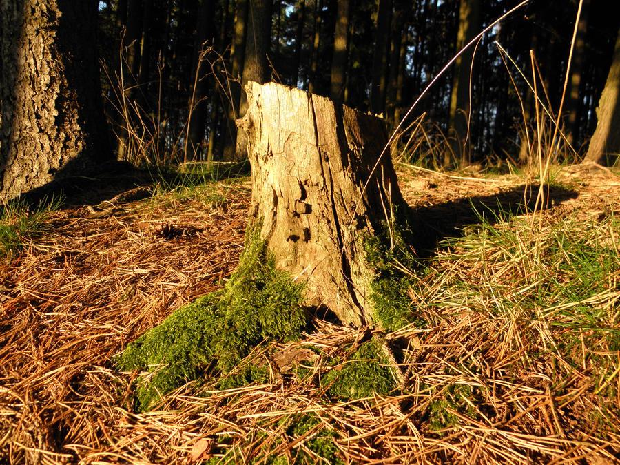 Stump by jeannemoon