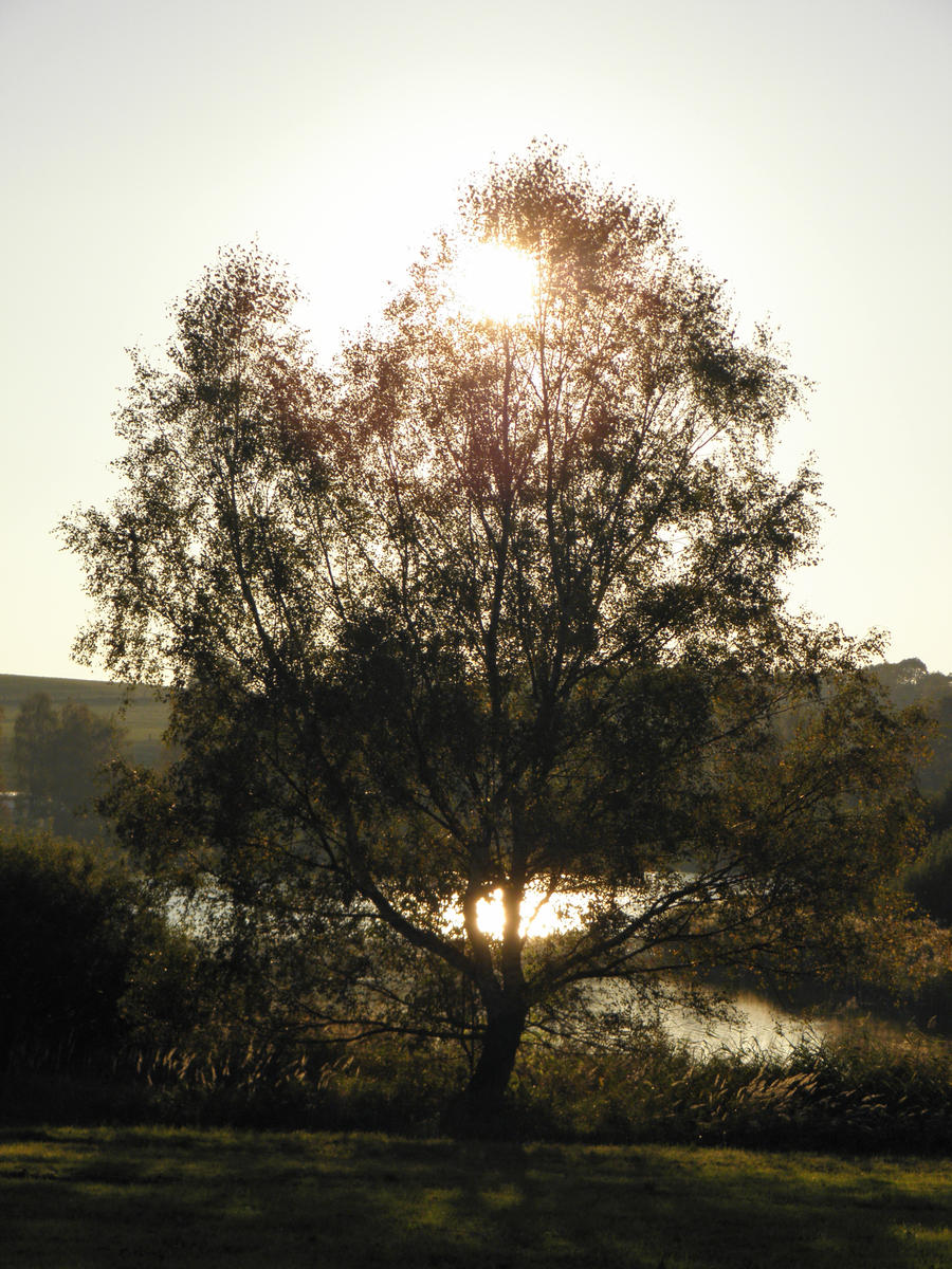 Sun behind a tree by jeannemoon