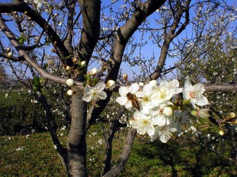 MY-Spring-MY
