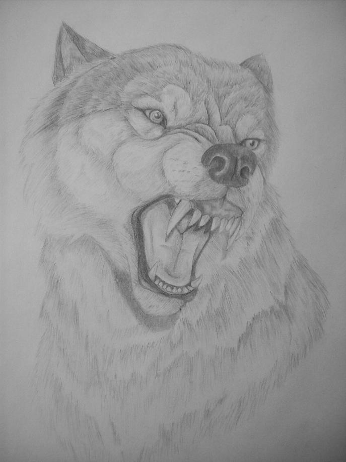 Wolf snarling side view drawing - photo#8