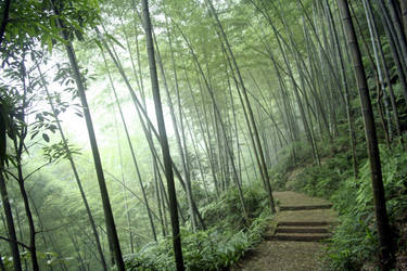 Trail in the Bamboo Forest by dbz-fan-jess