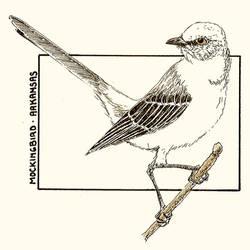 SKD - Arkansas - Mockingbird