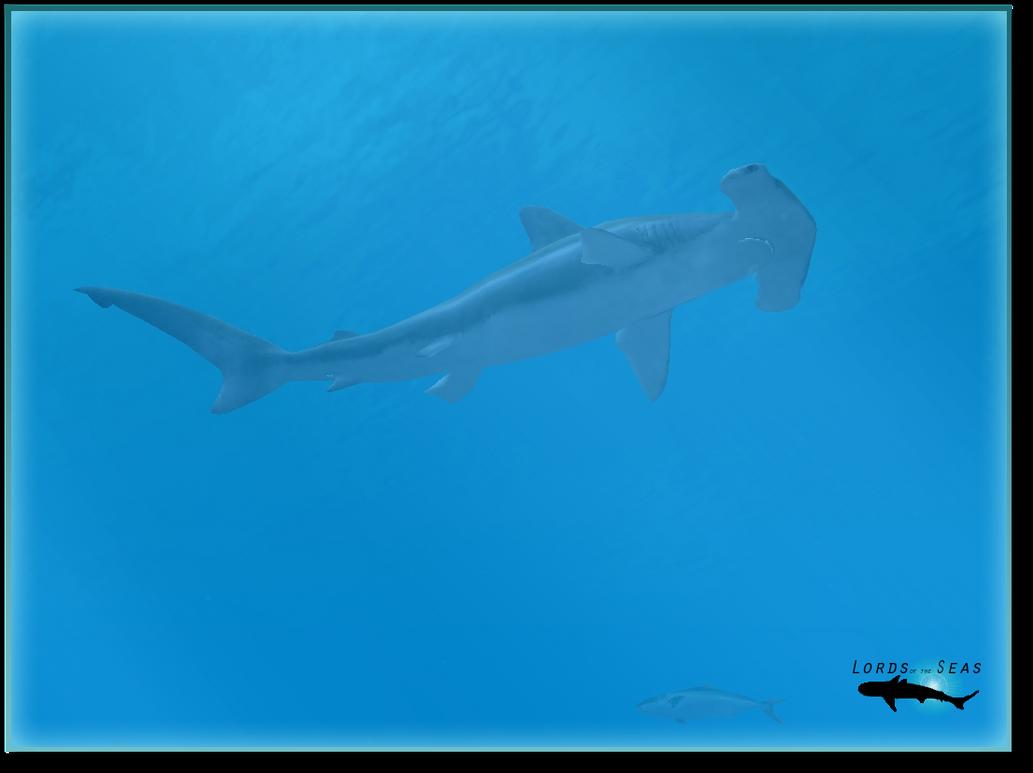 Smooth Hammerhead Shark by Trygon24 on deviantART