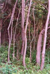 005 Trees
